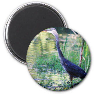 Blue Heron In Pond Magnet