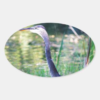 Blue Heron In Pond Oval Sticker