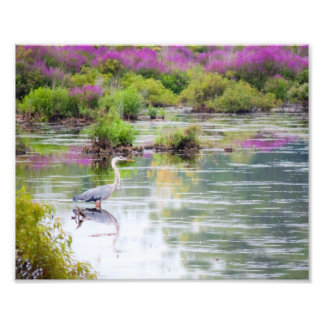 Blue Heron in the Swamp 8x10 print