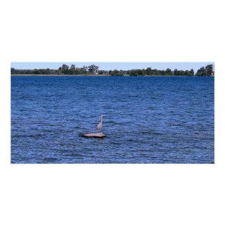 blue heron island card