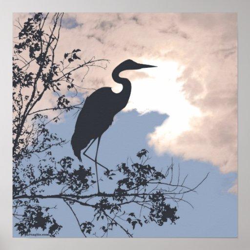 Blue Heron nursery sunset birds watching Posters