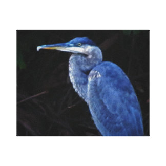 Blue Heron Photo Canvas Print