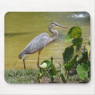Blue Heron Photo Mousepad Florida Bird Wildlife