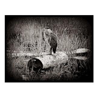 Blue Heron Photograph - Black and White Postcard