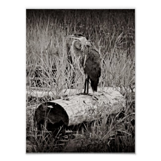 Blue Heron Photograph - Black and White Posters