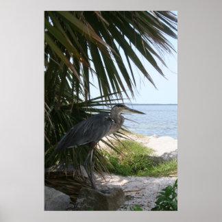 Blue Heron Poster