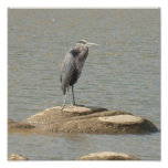 blue heron posters