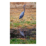 Blue Heron Reflection Poster