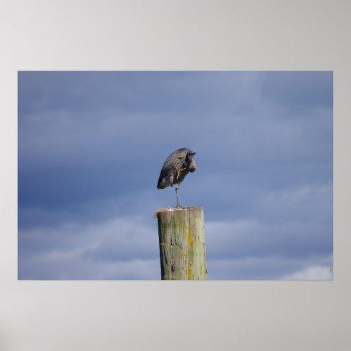 Blue Heron Waving Poster