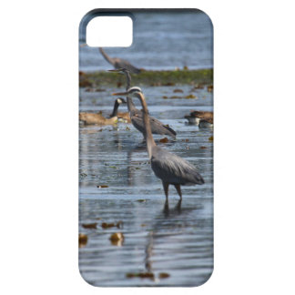 blue herons iPhone SE/5/5s case