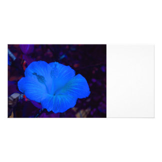 Blue hibiscus colored flower plant customized photo card