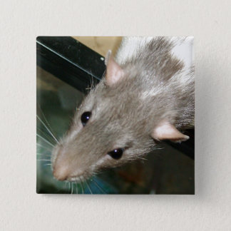 blue hooded rat pin badge