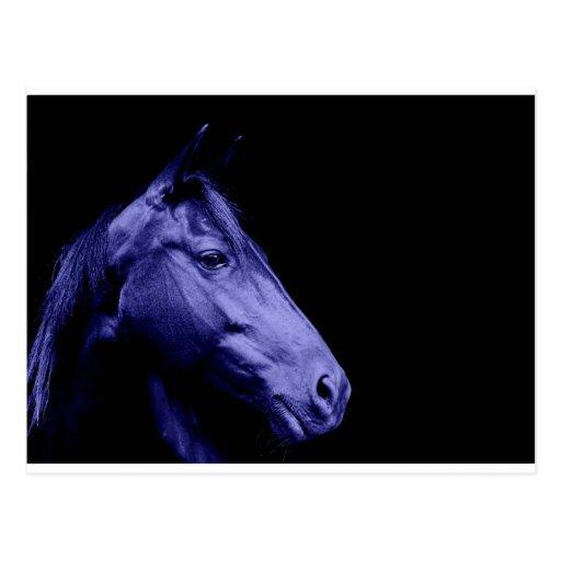 Blue Horse Design Postcard