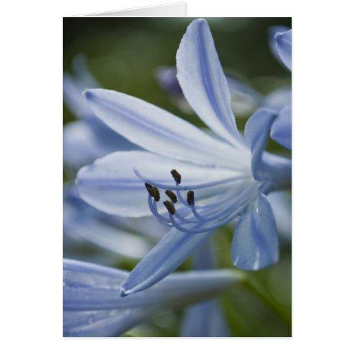 Blue Hosta Card