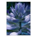 "Blue Hosta ""photographic"" card"