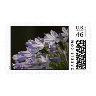 Blue Hostas Stamp