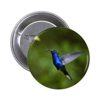 Blue Hummingbird Buttons