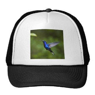 Blue Hummingbird Mesh Hats