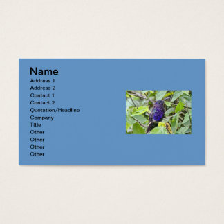 Blue Hummingbird Photo Business Card