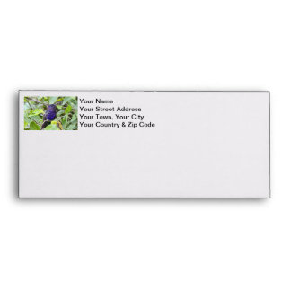Blue Hummingbird Photo Envelope