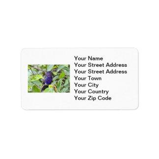 Blue Hummingbird Photo Label