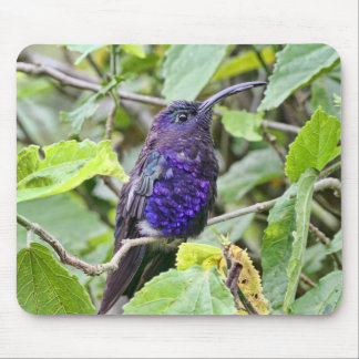 Blue Hummingbird Photo Mouse Pad