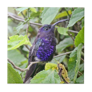 Blue Hummingbird Photo Tile