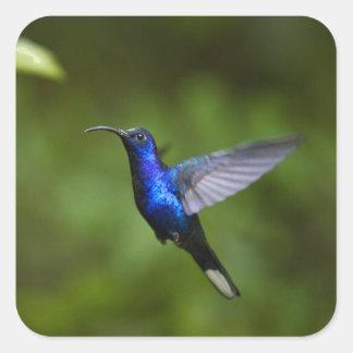 Blue Hummingbird Square Sticker