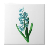 Blue Hyacinth by Pierre Joseph Redoute Tile