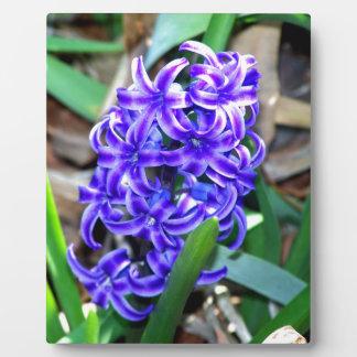 Blue Hyacinth Flower Display Plaques