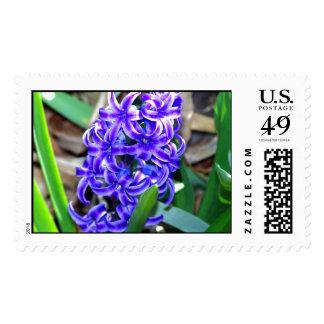 Blue Hyacinth Flower Postage Stamps