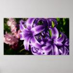 Blue Hyacinth I Spring Floral Poster