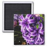 Blue Hyacinth II Spring Floral Magnet