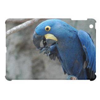 Blue Hyacinth Macaw iPad Mini Cases