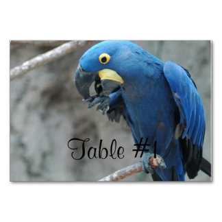 Blue Hyacinth Macaw Table Cards