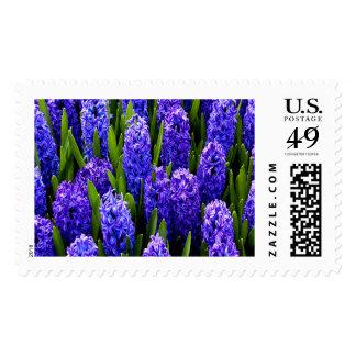 Blue Hyacinths Large Postage Stamp