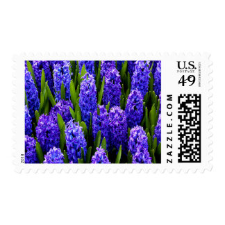 Blue Hyacinths Medium Postage