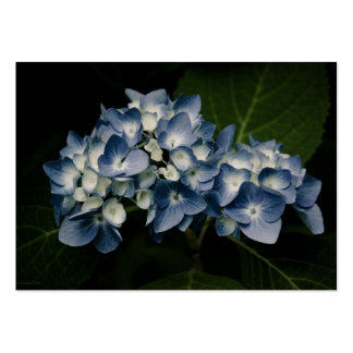 Blue Hydrangea 8514 Mini Print Large Business Cards (Pack Of 100)