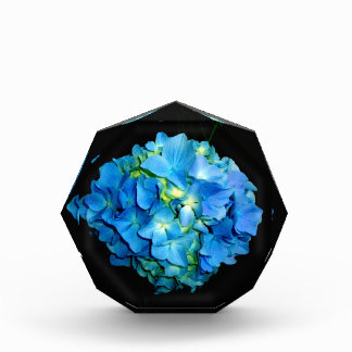 Blue Hydrangea Award