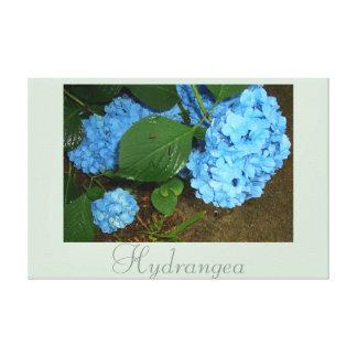 Blue Hydrangea Flower Art Nature Photography 2 Canvas Print