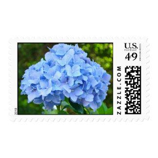 Blue Hydrangea Flower Garden postage stamps
