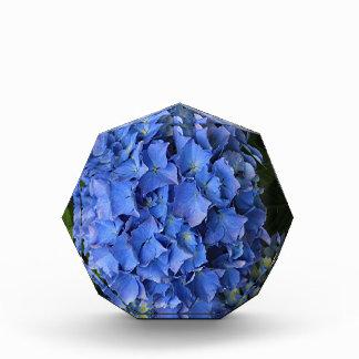 Blue hydrangea flower in bloom 2 awards