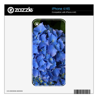 Blue hydrangea flower in bloom 2 decal for the iPhone 4S