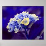 Blue Hydrangea Flower Photography Poster Print