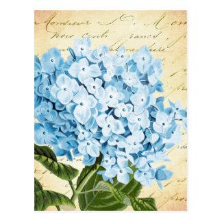 Blue Hydrangea Flower Vintage Botanical Postcard