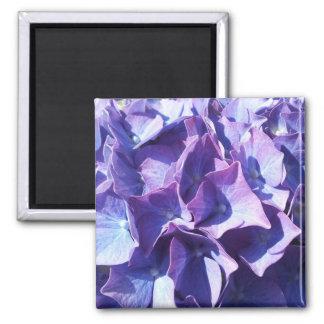 Blue Hydrangea Flowers Close Up Photo Magnet