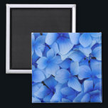 """Blue Hydrangea Flowers Magnet<br><div class=""""desc"""">Hydrangea is a genus of 70–75 species of flowering plants native to southern and eastern Asia (China, Japan, Korea, the Himalayas, and Indonesia) and the Americas. By far the greatest species diversity is in eastern Asia, notably China, Japan, and Korea. Most are shrubs 1 to 3 meters tall, but some...</div>"""
