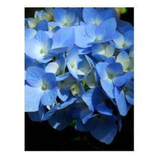 Blue Hydrangea II Postcard