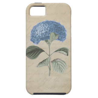 Blue Hydrangea on Vintage Calligraphy Paper iPhone 5 Cases