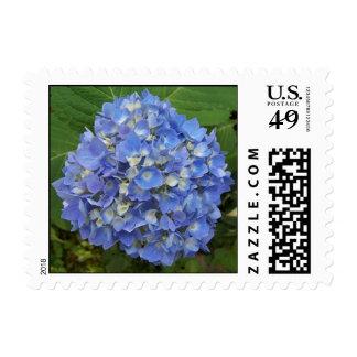 Blue Hydrangea Postage